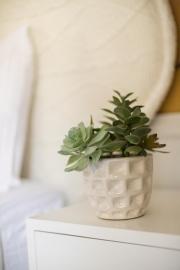 Succulent in Gold Bedroom.